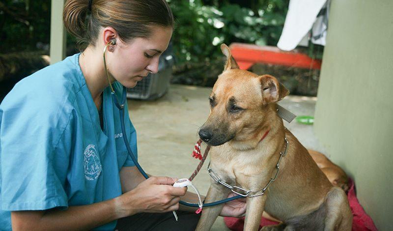 Broadreach Costa Rica: Veterinary Experience