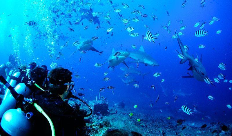 Broadreach Fiji Shark Studies